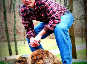 Country beaver or city beaver