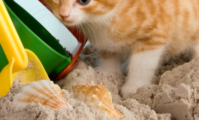 Super simple, free and natural solution that will keep your cats out of the sandbox all summer long.