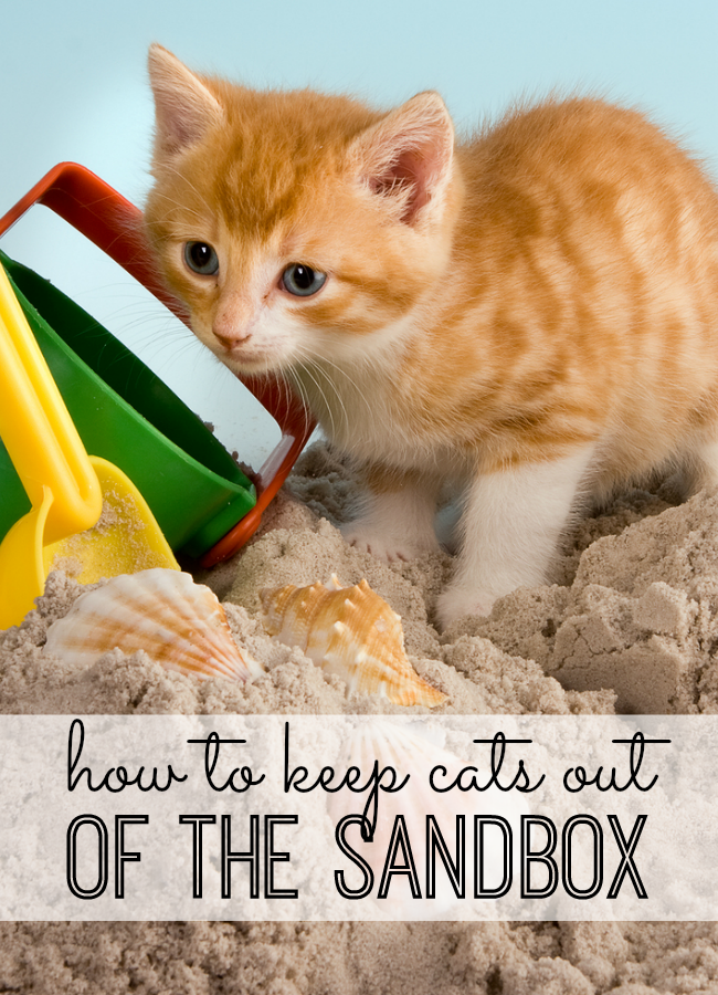 Super simple and FREE solution that will keep your cats out of the sandbox all summer long!