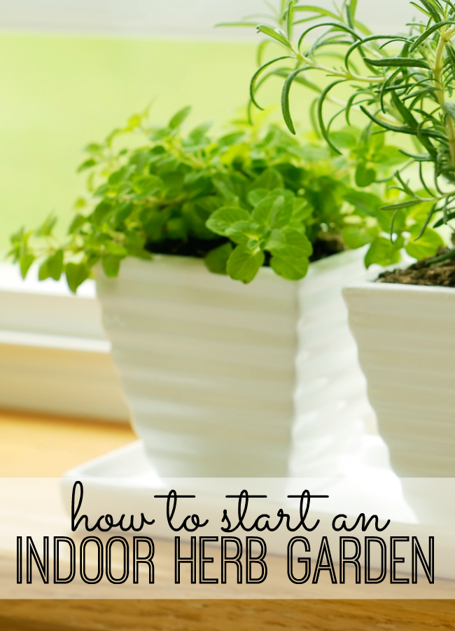 Starting An Indoor Herb Garden At Home Requires A Little Planning Lot Of Sunlight