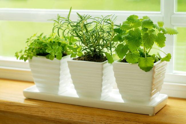 starting an indoor herb garden at home requires a little planning a lot of sunlight - How To Start An Indoor Herb Garden