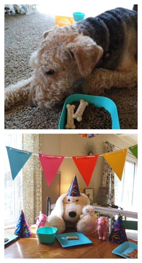 Benson likes to invite all of his furry friends to his annual birthday party.