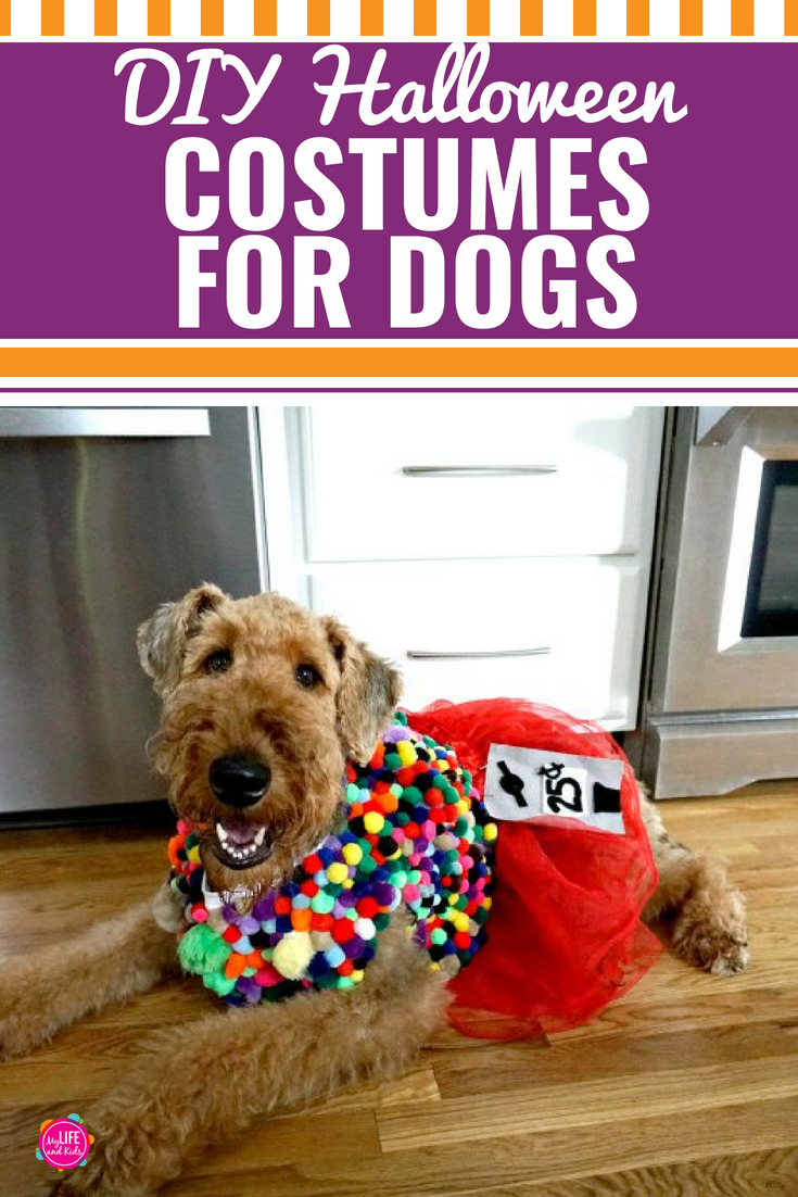 Diy halloween costumes for dogs my life and kids whether your dog is large or small we have an easy and cute homemade diy solutioingenieria Choice Image